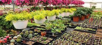 Plant Nurseries | Plant Nursery Health | NCH Asia